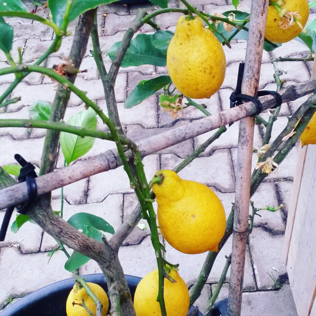 Nieuwe naam: Lemontwist